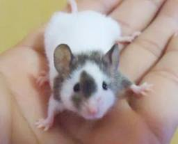Hamisters