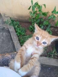 Título do anúncio: Adoção gatos