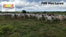 Fazenda a venda no município de Nova Mamoré com 700 hectares