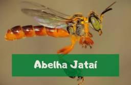 Título do anúncio: Abelha jatai