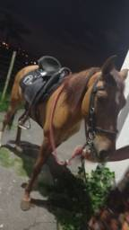 Título do anúncio: Cavalo manga larga