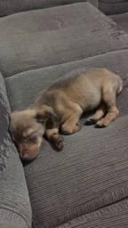 Título do anúncio: Doação de filhote de cachorro