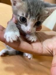 Doação filhote de gato