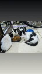 Título do anúncio: Gatos filhotes. 2 fêmeas 1 macho