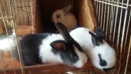 Lindos filhotes de coelhos