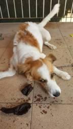 Dog para doação
