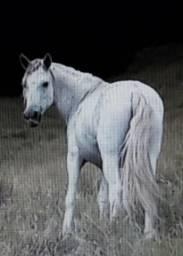 Égua MM paulista 10 mil