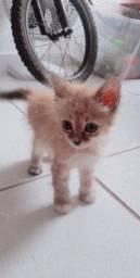 Gato(a) filhote para doação!