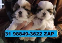 Canil Os Melhores Filhotes Cães BH Shihtzu Lhasa Maltês Yorkshire Bulldog Pug Beagle