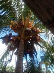 Título do anúncio: Vendo coco