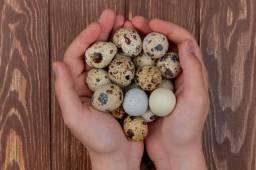 Ovos Galados de Codornas gigante