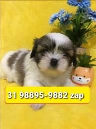 Título do anúncio: Canil Top Cães Filhotes BH Lhasa Beagle Shihtzu Yorkshire Maltês Poodle