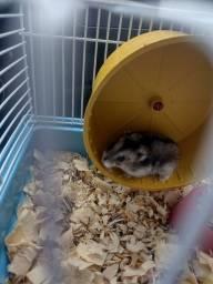 Título do anúncio: Vendo um hamster chinês