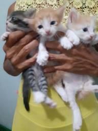 Gatos pra adoção
