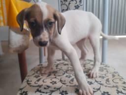 Estou doando essa cachorrinha, apareceu aqui em casa mas não posso ficar com ela