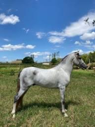 Título do anúncio: Vendo cavalo mangalarga