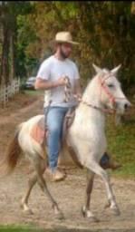 Egua marcha picada , troco em cavalo inteiro