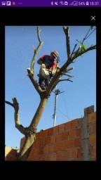 Título do anúncio: Serviços de poda de árvores em geral com motosrrra