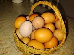 Título do anúncio: Ovos Caipira R$ 10,00 dúzia