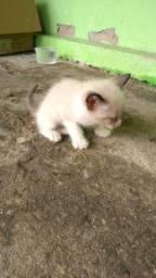 Título do anúncio: Gatinho para adoção