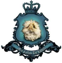 Mini coelha lop 100% linhagem uruguaia (promoção)