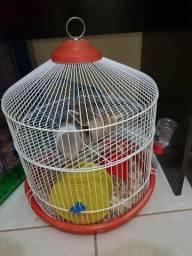 Doo hamster macho sírio