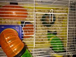 Vendo hamster anão Russo com gaiola