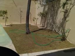 Manutenção e implantação de gramados