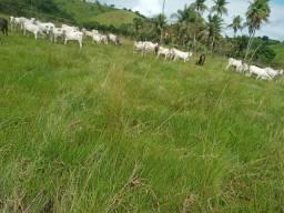 Fazenda 112 hect.,Santana do Mandaú