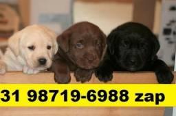 Canil Excelentes Filhotes Cães BH Labrador Pastor Akita Rottweiler Boxer
