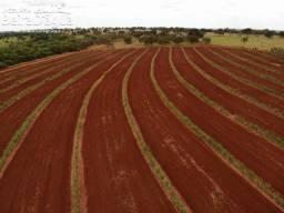 Fazenda Plantada em Cana 14,5 Alqueirao em Ituiutaba