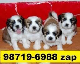 Canil Filhotes Lindos Cães BH Lhasa Poodle Basset Shihtzu Maltês Yorkshire Pug