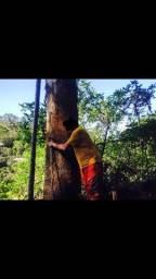 Título do anúncio: Eucalipto árvore
