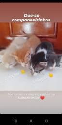 Doação de gatinhos fofos