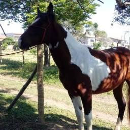 Título do anúncio: Potra paint horse 17 meses sem registro 5.000