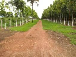 Vendo 10 alqueires de terra no Tocantins