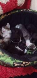 Doa-se gatinhos 1 mes de vida