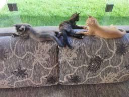 Doa-se filhotes de gatos.
