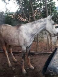 Vendo egua pampa