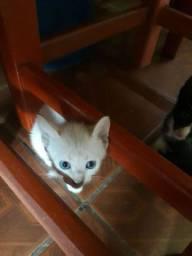 Doando esse gatinhos