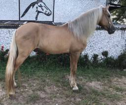 Cavalo mangolina de marcha picada diferenciado