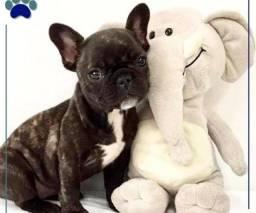 Título do anúncio: Bulldog Macho Tigrado 2/disponível