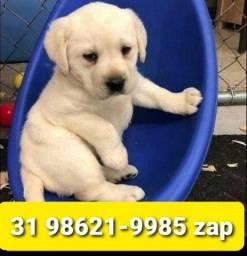 Título do anúncio: Canil Filhotes Belíssimos Cães BH Labrador Rottweiler Pastor Golden Akita Dálmata
