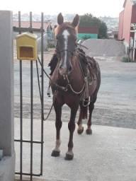 Cavalo tostado