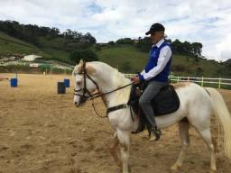 Casal de Cavalos Paint Horse Puros de Origem
