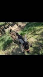 Título do anúncio: Casal de cabras e filhote