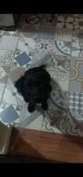 Título do anúncio: Cachorrinha para adoção