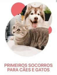 Título do anúncio: Curso Primeiros Socorros para Cães e Gatos