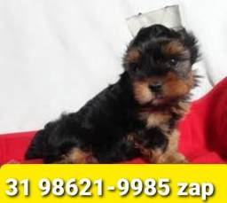 Título do anúncio: Canil Líder Cães Filhotes BH Yorkshire Maltês Shihtzu Basset Beagle Lhasa Poodle