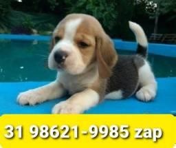 Título do anúncio: Canil Filhotes Cães Selecionados BH Beagle Poodle Yorkshire Lhasa Shihtzu Maltês Basset
